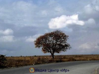Одинокое дерево на Зарской дороге